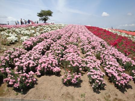 夏の北海道2008 046.jpg