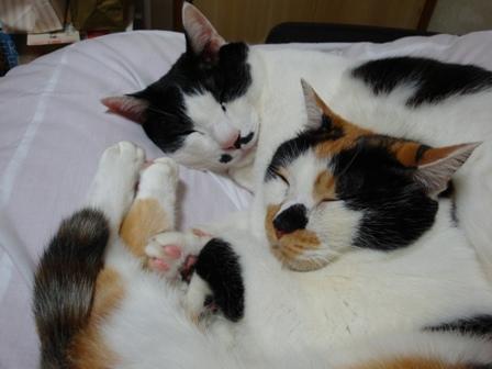 猫たち 048.jpg