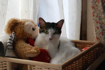 猫たち 093.jpg