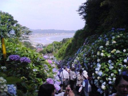 鎌倉2008 008.jpg